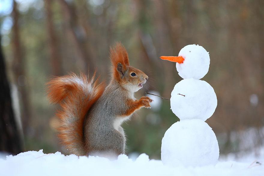 Σκίουροι - Ρώσος Φωτογράφος